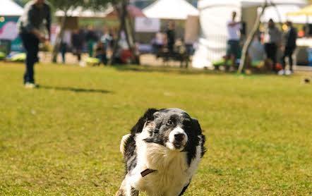 FumTur promove terceira edição do evento 'Bom pra Cachorro'